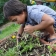 Garden Based Learning is one of 6 ʻĀINA In Schools components