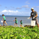 Plastic Free Hawaii Beach Cleanup, Haleʻiwa
